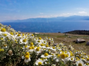 Nature, Hotel Electra: Tolo beach hotels rooms Greece